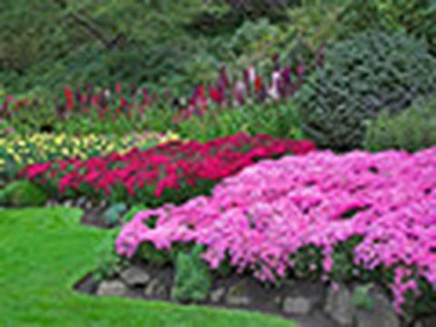 How to garden: Weeding, dead heading and staking gardening basics