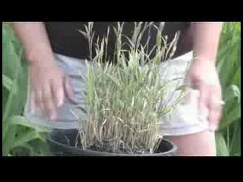 Gardening Tips : How to Care for Bamboo Plants