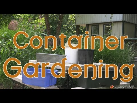 Container Gardening: An Easy Way to Grow Your Own Food