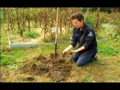 Basic Gardening Tips : How to Create Good Growing Soil