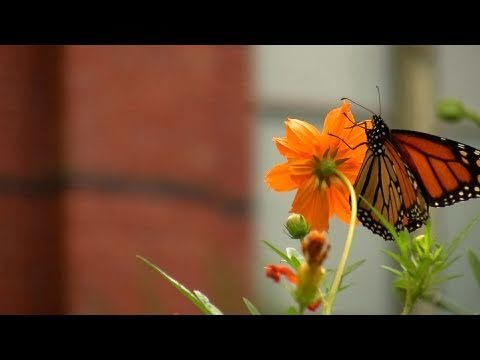 Gardening Tips at the Smithsonian Butterfly Habitat Garden