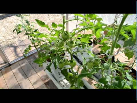 Organic vegetable growing solution - complete greenhouse kit