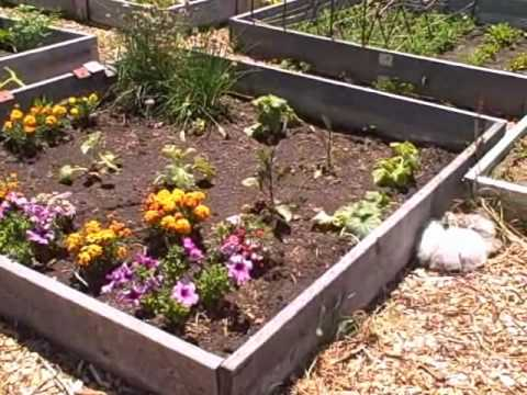 Square Foot Gardening without a Raised Bed at a Local Community Garden