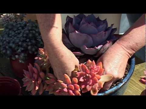 Debra Lee Baldwin - How to Plant a Succulent Container Garden