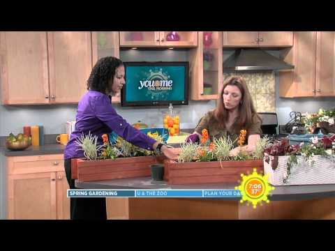 How To Plant an Urban Window Box or Balcony Garden