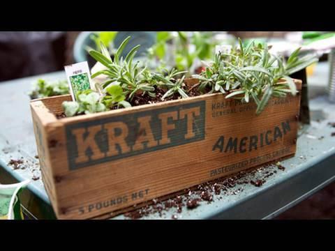How to Garden for Earth Day: Window Box, Urban Gardening