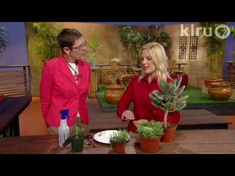 Succulent salvage: Central Texas Gardener