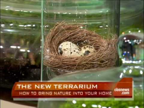 Growing Terrariums