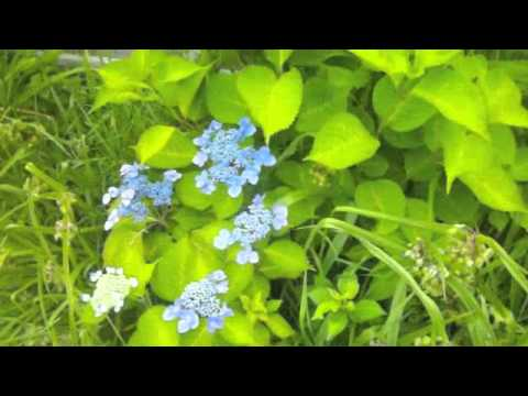 Mort's Summer Garden 2015