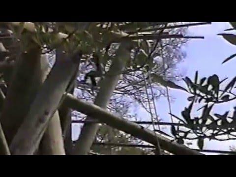 Birds of San Diego Zoo and Botanical Garden
