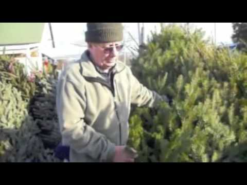 How To Select And Care For Christmas Trees