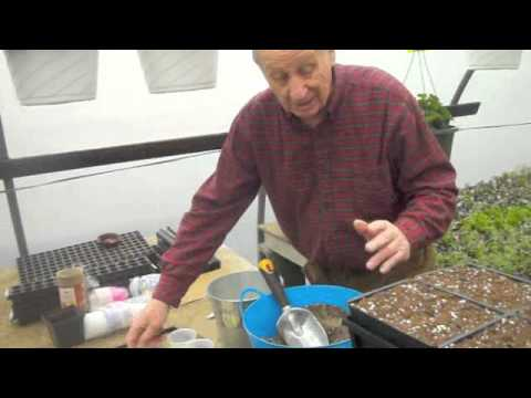 How To Transplant Seedings 201