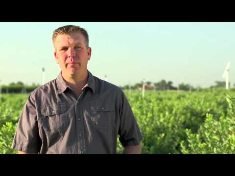 Growers' Stories - Blueberries