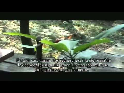 Les plantes chantantes de Damanhur - (Mars 2012)