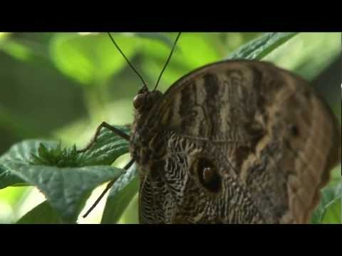 Metamorphosis: The Beauty & Design of Butterflies