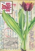 tulipCard