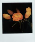 ranuncolo e tulipani