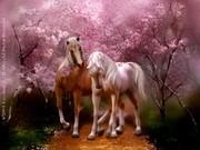 CAVALOS ALADOS - Amores de Primavera