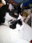 SPOTTY & FLUFFY 2007