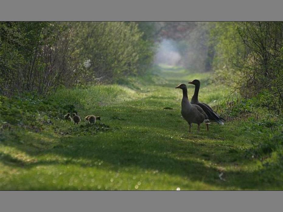 Aves e Pássaros (265)