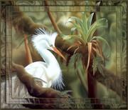 Aves e Pássaros (498)