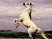 Enviando email: 482_o_voo_da_aguia, 8594cavalos, arabian-stallion-on-back-legs, Belos e ferrozez, Bint-Falloo,-Arabian-mare, Black%20Horse, cavalos, cavalos-5893, CHAPADAS+da+OVELHA+3[1]Jan, fotos-gol