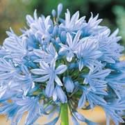 Flores azuis para você!