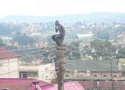 kolawole gbenga