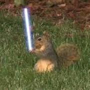 Nolan (Jedi~Squirrel)