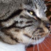KawaiiKitty213213(Kitty)