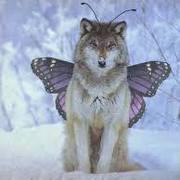ButterflyWolf