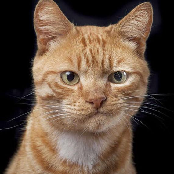 Tragica( Kewt Kitty)