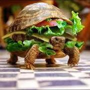 Hadley (mythical turtle)