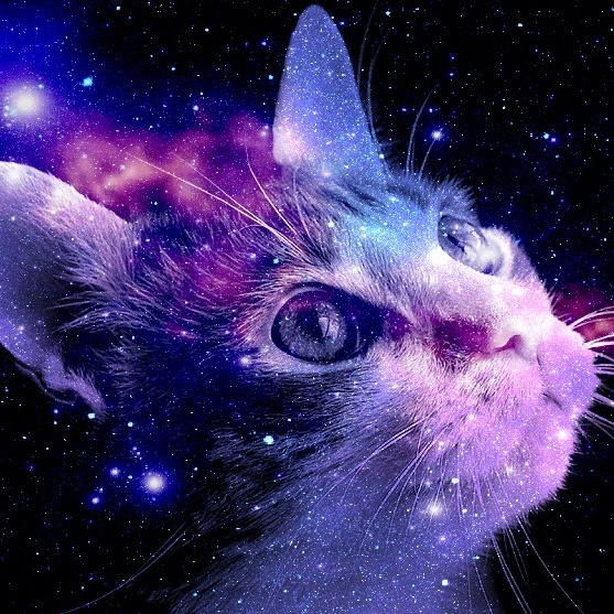 Cat (Resplendent Moonrat)