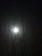 The moon tangled in the branches of the fruit tree