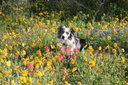RanchWildflowers 214