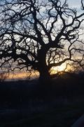 grapevine sunrise (1)
