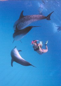 Me swimming with wild dolphins