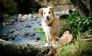 Do You Want Your Pet to Accompany You on A Vacation?