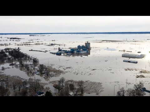 Worst flooding damage in our state's history – As many as a million calves lost in Nebraska!