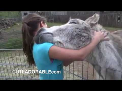 Cute friendship: Donkey and girl