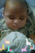 orca-image-2096398685.jpeg_1537143132371