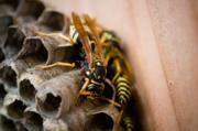 wasp_control