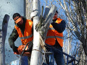 Tree Felling Service in Randburg - Make a call (061 507 1762)