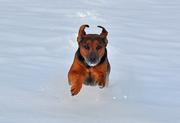 la corsa nella neve