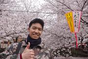 Sakura-Matsuri