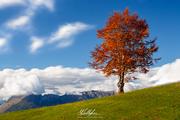 Incantevole autunno