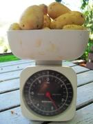 Spuds weigh in at 1.25kg