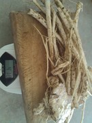 (vic) horseradish root from one plant