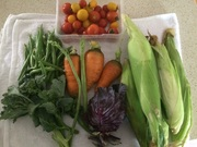 Today's harvest from the garden